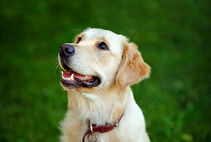 Pet Dental Health Month